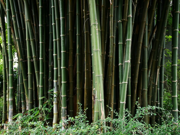 Albero di bambù sullo sfondo
