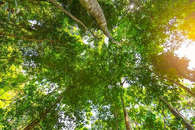 Albero di banyan nel parco alla tailandia
