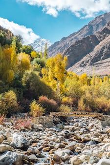 Albero di pino, ponte in autunno e montagna a leh ladakh, in india