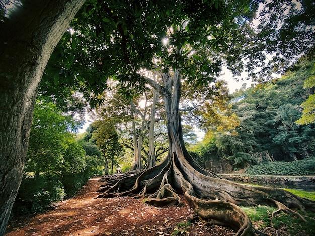 Albero esotico con le radici sul terreno nel mezzo di una bellissima foresta