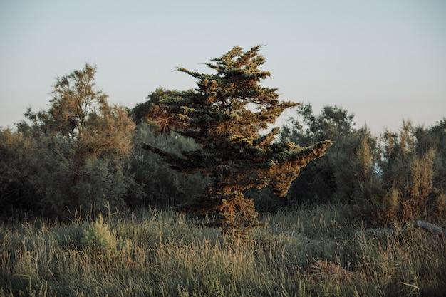 Albero esotico su un campo di erba circondato dagli alberi con il cielo nuvoloso in