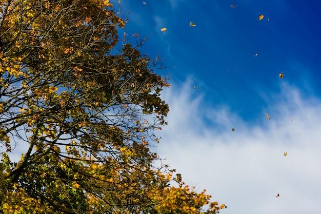 Albero in autunno o in autunno