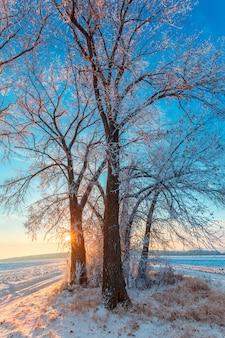 Albero in strada d'inverno. alba gelida sui campi.