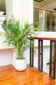 Albero in vaso per la decorazione della casa e dell'edificio