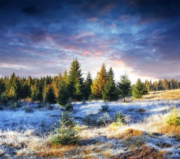 Albero innevato inverno magico. tramonto nei carpazi. ukr