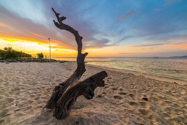 Albero intrecciato sulla spiaggia al tramonto