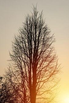 Albero morto in arancio del tramonto giù la montagna