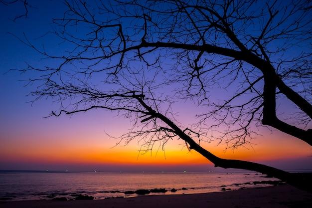 Albero morto in spiaggia al tramonto