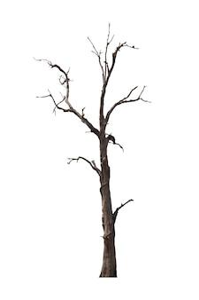 Albero morto o isolato albero essiccato su bianco