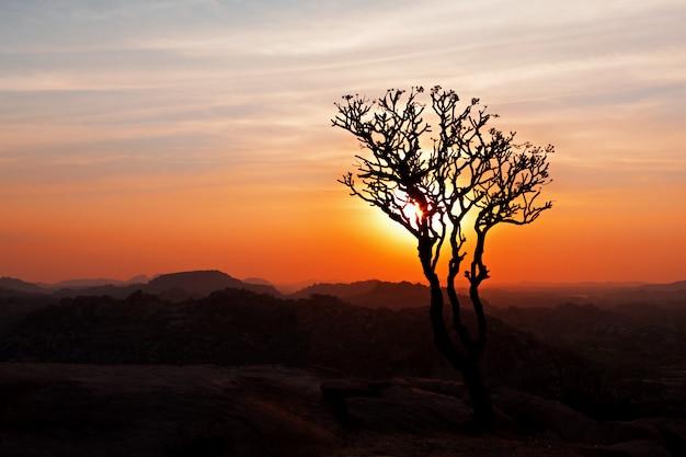 Albero nel cielo al tramonto