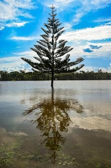 Albero nel mezzo di un lago