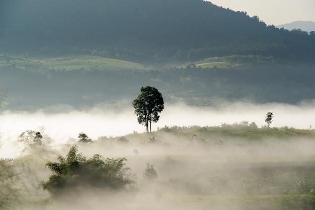 Albero nella nebbia, un solo albero solitario in un campo di fattoria nebbiosa nella foschia mattutina e nebbia.
