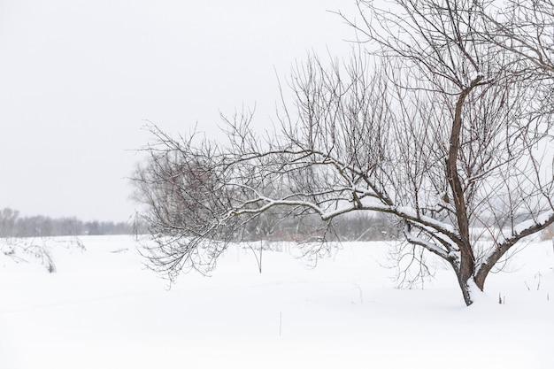 Albero nudo asciutto di inverno nel mezzo di un campo nella neve. paesaggio invernale