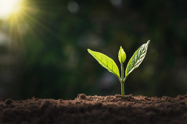 Albero piccolo in crescita in natura e luce solare