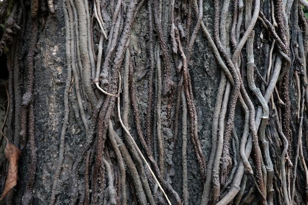 Albero radice nella foresta / complessità