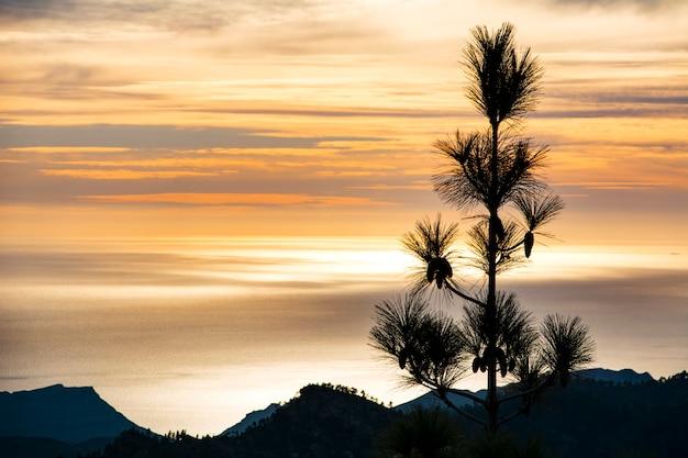 Albero retroilluminato, nero, con tramonto arancione