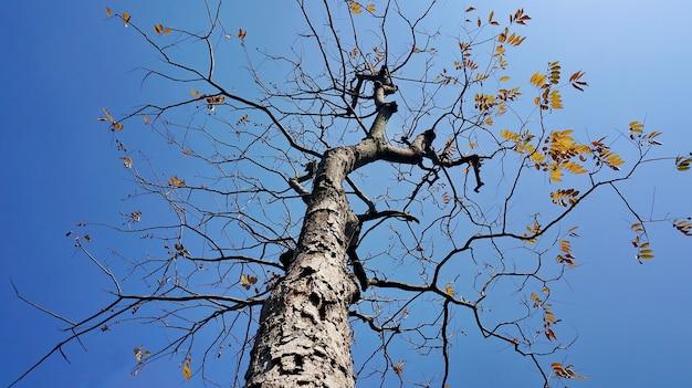 Albero secco con lo sfondo del cielo