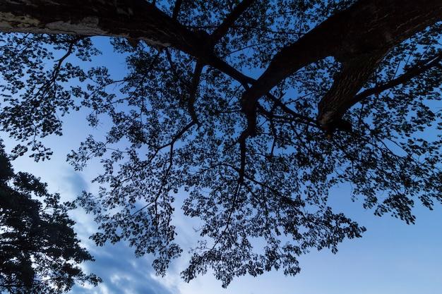 Albero silhouette di notte
