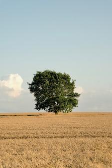 Albero solitario del raccolto