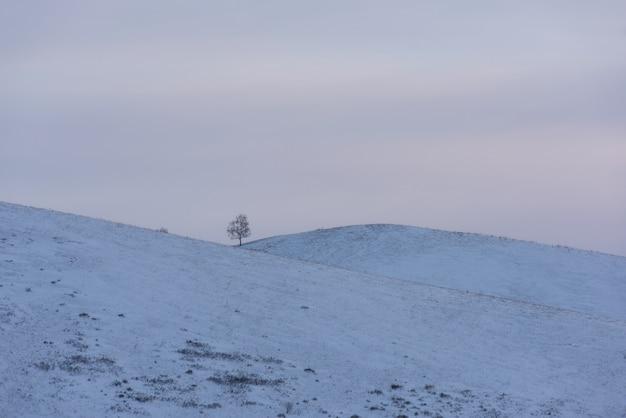 Albero solitario in altai nevoso