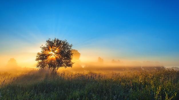 Albero solitario in campo con la luce del sole