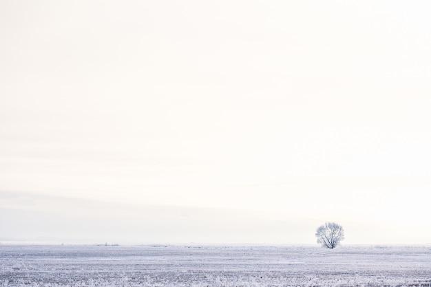 Albero solitario nel campo invernale