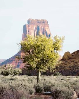 Albero solitario nel deserto del grand canyon con un'alta roccia