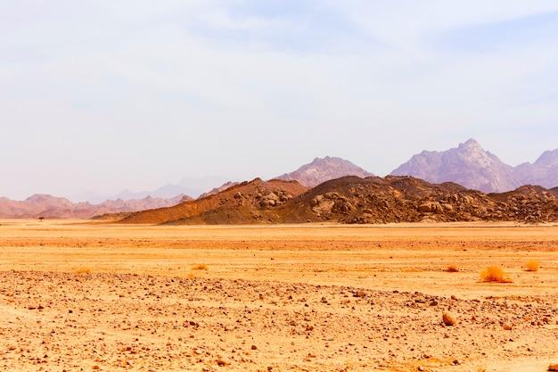 Albero solitario nel deserto