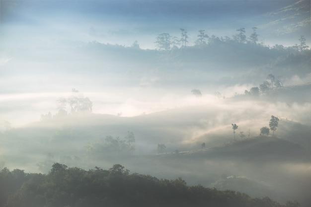 Albero sulla collina in nebbia