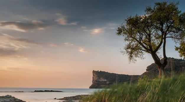 Albero sulla spiaggia vicino al mare con una scogliera rocciosa e il bel cielo