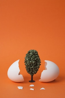Albero tra gusci d'uovo rotti