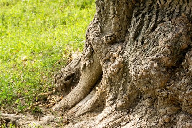 Albero tronco deformato