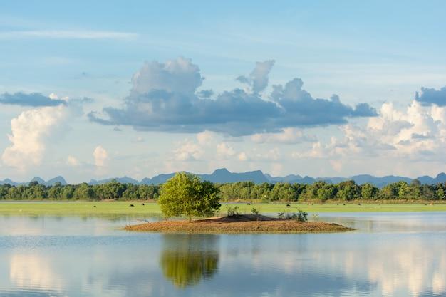 Albero verde solo nei precedenti del cielo nuvoloso e del lago con lo spazio della copia