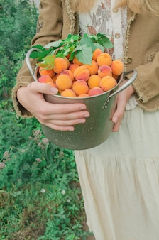 Albicocche dolci fresche in una vaschetta di metallo.
