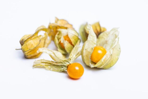 Alchechengio (physalis peruviana) o ciliegie macinate, physalis minima, ciliegia macinata pigmeo, bacca inca, fragola dorata, pomodoro fragola, pomodoro buccia isolato sul muro bianco