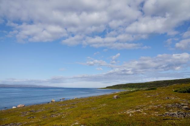 Alghe gettate surf, riva del mar glaciale artico, penisola di sredniy