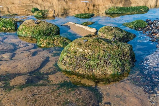 Alghe verdi sulle rocce sul bordo del mare