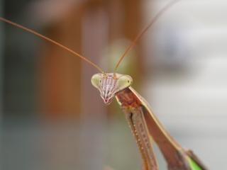 Alieno, come insetti, insetto