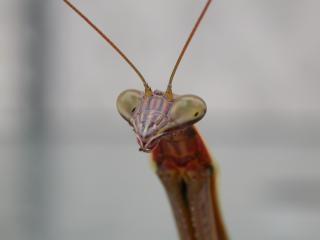 Alieno insetto simile, tentacoli
