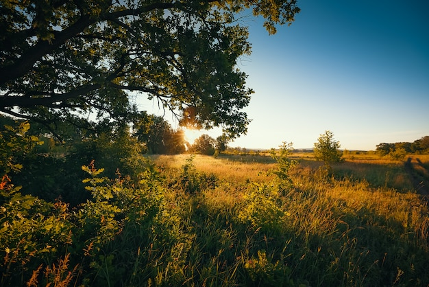 All'alba, i primi raggi del sole irrompono tra i rami di una grande quercia che cresce in un campo con varie erbe.