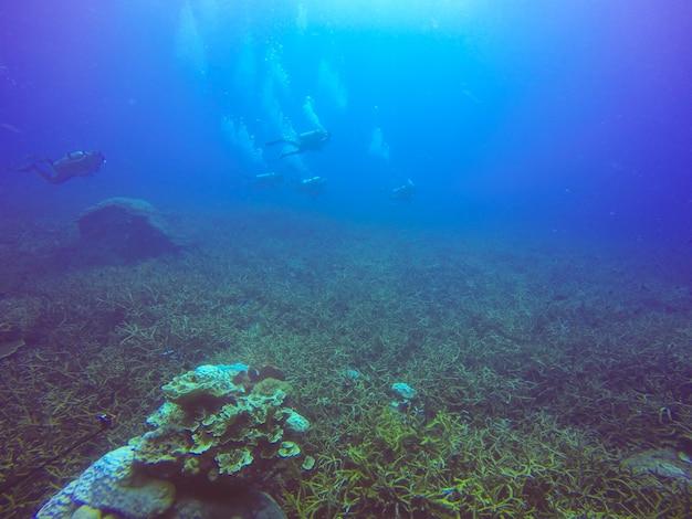 All'aperto marino nuoto sport egitto