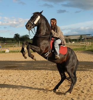 Allevamento di cavalli