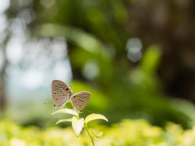 Allevamento di farfalle