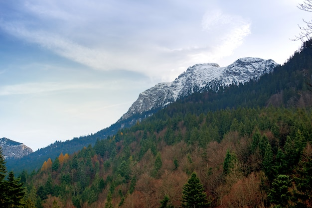 Alpi con paesaggio forestale di alberi di pino