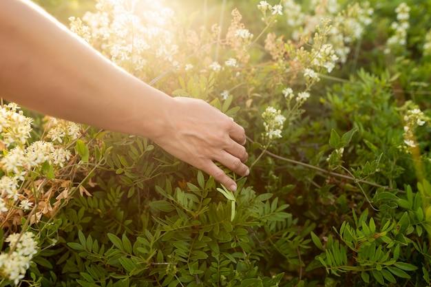 Alto angolo della mano attraverso erba in natura
