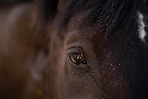Alto vicino dell'occhio e della testa del cavallo di brown