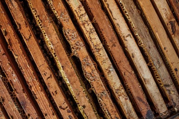 Alveare aperto con api strisciano lungo l'alveare su telaio in legno a nido d'ape. concetto di apicoltura.