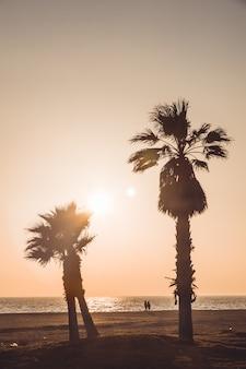 Amanti che camminano tenendosi per mano guardando il tramonto. la spiaggia ha due alberi di cocco molto alti. almerimar, almeria, spagna