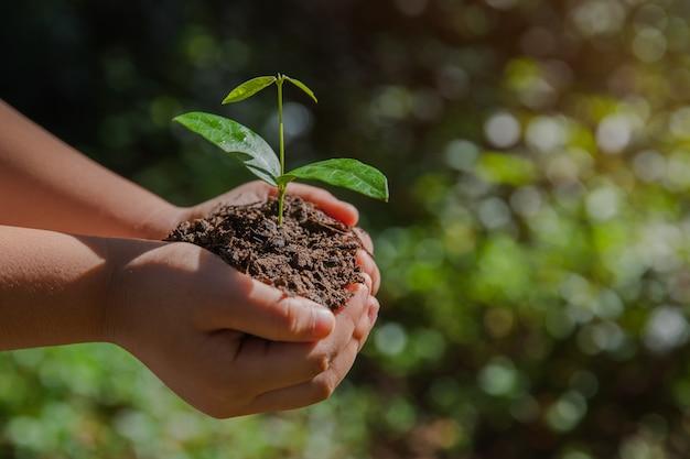 Ambiente earth day nelle mani di alberi che crescono piantine.