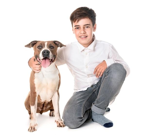 American staffordshire terrier e adolescente